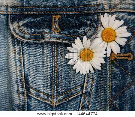 Fresh white daisy flowers in jeans pocket