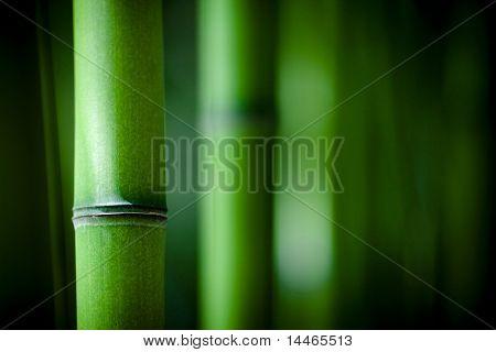 Bambu Zen
