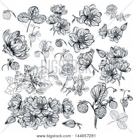 Mega collection or vector set of hand drawn flowers