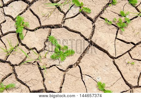 Background, Texture.  Cracks In The Ground Soil Erosion. The Process Of Eroding Or Being Eroded By W