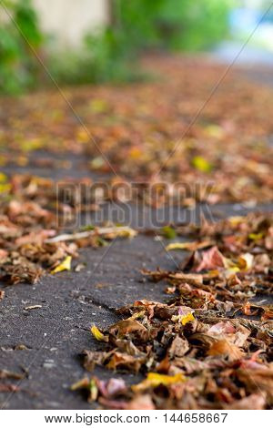 autumn leaves on a city pavement soft backgraound