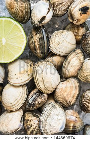 Close up of fresh clams with a slice of lime