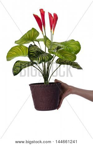 Hand holding a flower pot isolated on white