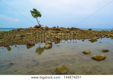 Minimalism style landscape. Amazing tropical beach landscape with tree with beach stone at Labuan beach,Malaysia.