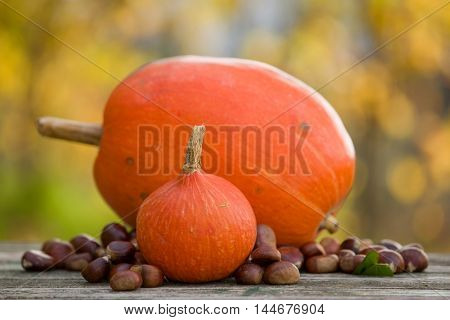 Autumn nature concept. Fall fruits outdoors on a wooden table
