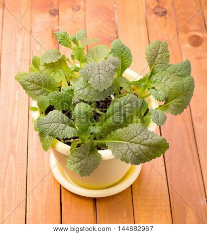 Grown-home mustard greens salad on table closeup