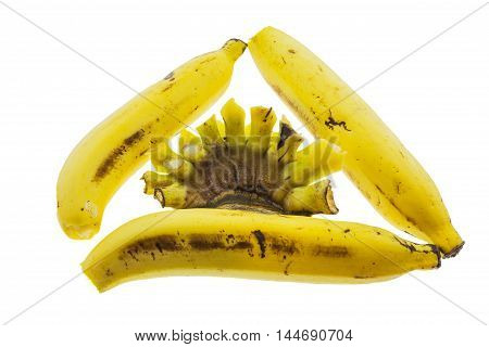 Bananas and their calyx arranged as triangle symbol isolated on white background