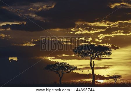 Amazing Sunset In Masai Mara, Kenya.