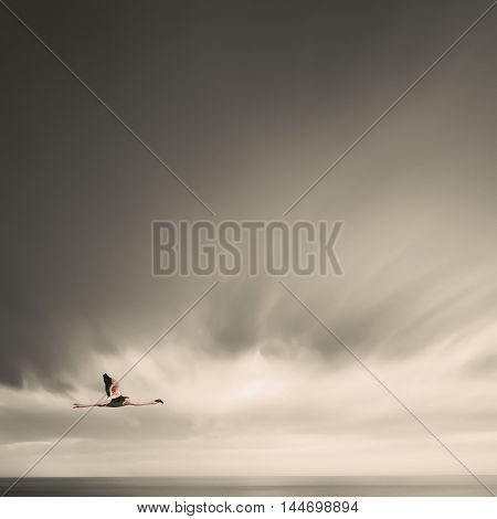 Minmalistic Photo Of Flamingo While Flying In Black And White Sky.