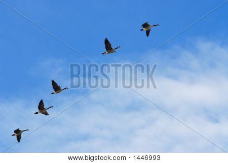 Frühling-Flug