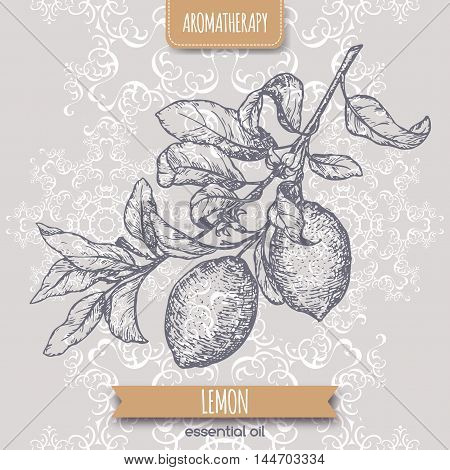 Citrus limon aka lemon branch sketch on elegant lace background. Aromatherapy series. Great for traditional medicine, perfume design, cooking or gardening.