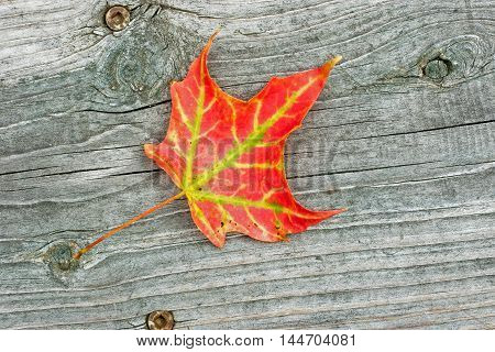 fall season background red and yellow maple leaf isolated on weathered wooden step closeup autumn background