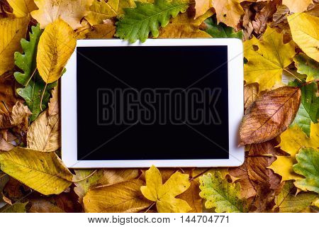 Autumn Composition. Colorful Leaves And Tablet. Studio Shot