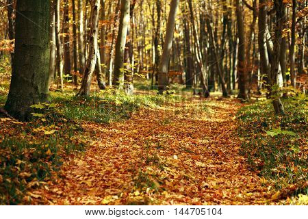 Beautiful autumn forest in the rays of the evening sun nature background