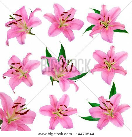 lily flowers set