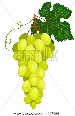 Cluster of dark green grapes.