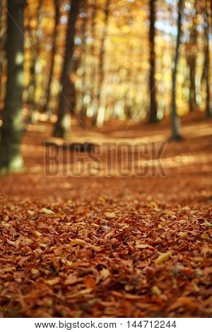 Fallen leaves in autumn forest in the rays of the evening sun nature background