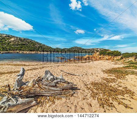 a driftwood in Porto Liccia in Sardinia