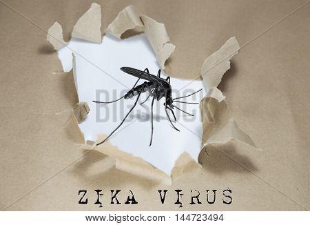 ZIKA Virus (ZIKA-Virus) written under torn paper