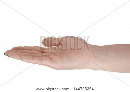 Palm up holding anything adult woman's skin cyan manicure. Isolated on white background.