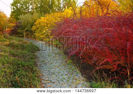 Beautiful autumn alley in the park with colorful trees.