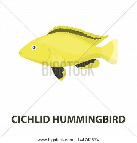 Cichlid hummingbird fish icon cartoon. Singe aquarium fish icon from the sea, ocean life cartoon.
