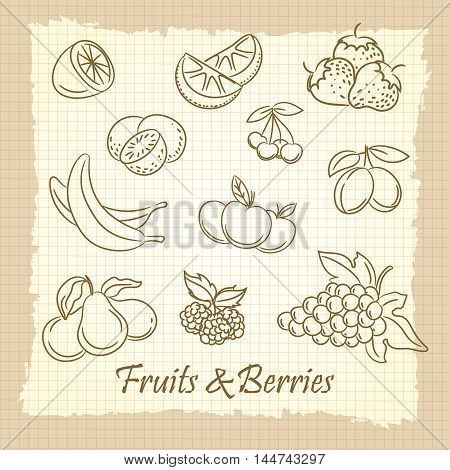 Popular hand drawn fruits and berries on vintage notebook page. Vector illustration