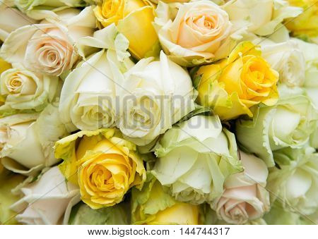 fresh natural roses colorful bouquet natural  background