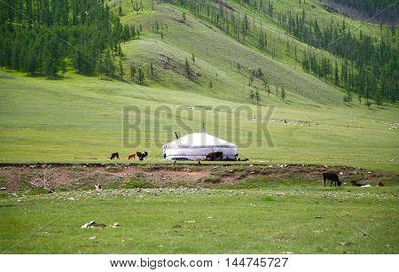 Gorkhi-Terelj National Park at Ulaanbaatar , Mongolia