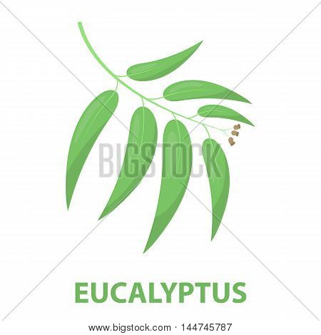 Eucalyptus vector illustration icon in cartoon design