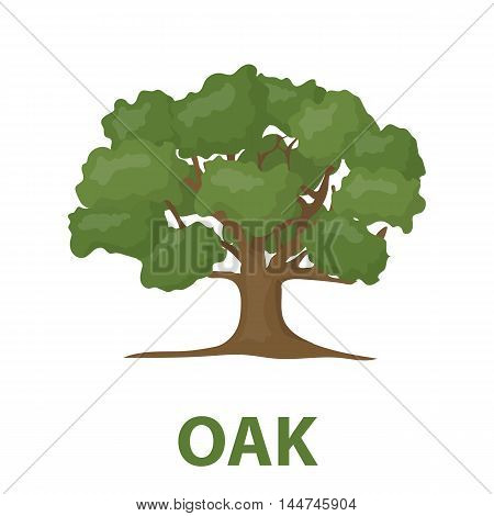 Oak vector illustration icon in cartoon design