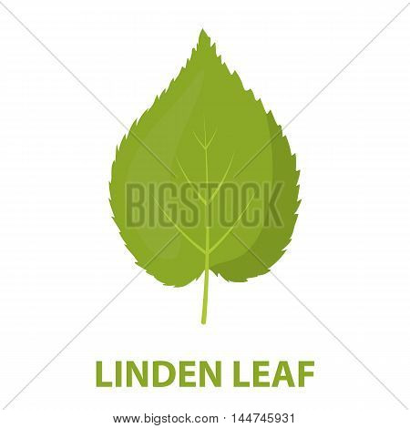 Linden leaf vector illustration icon in cartoon design