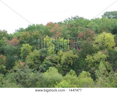 Hillside Of Autumn Colors