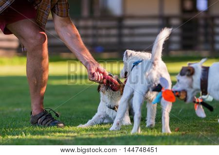 Man Is Playing With His Dogs