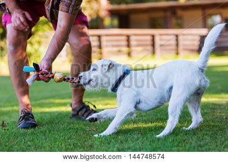 Man Is Playing With His Dog
