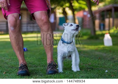 Man Is Training With His Dog