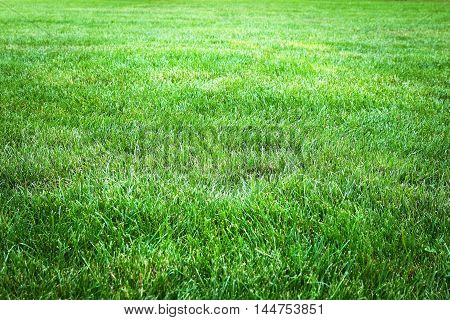 Green grass background from a field, close up