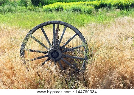 Antique wooden wagon wheel lies overgrown with weeds in a field in Happy Valley Wyoming.