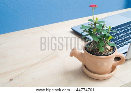 Office desk with laptop and Euphorbia milii flower on terracotta flower pot.
