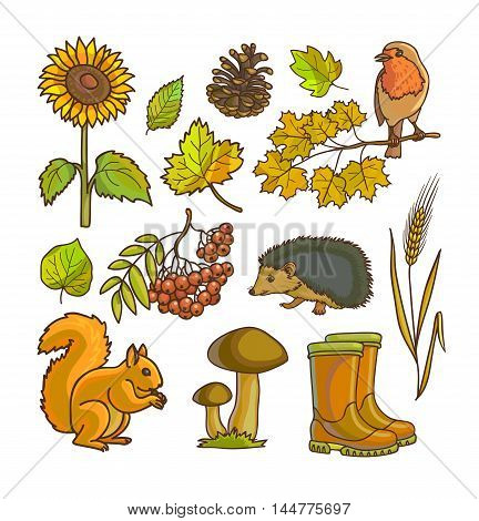 Autumn or fall icon and objects set for design. Vector Illustration. Isolated on white.