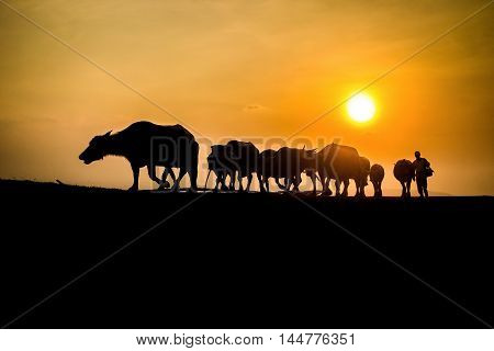 Thai Buffalo silhouette with sunlight background,Vignette effect