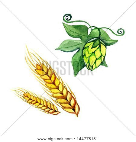watercolor set with hops flower leaf and malt wheat