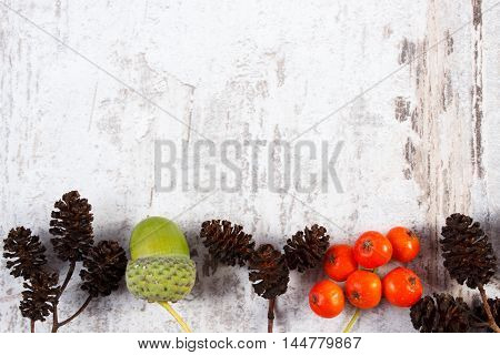 Red Rowan, Alder Cone And Acorn With Copy Space For Text