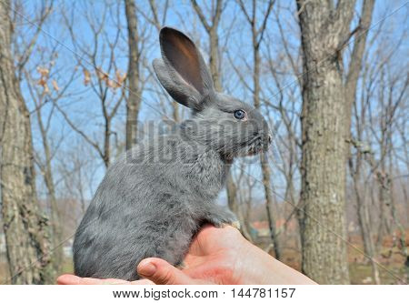 A close up of the young rabbit on hands.