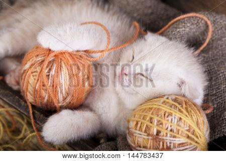 kittens scottish fold sleeping with a ball of wool