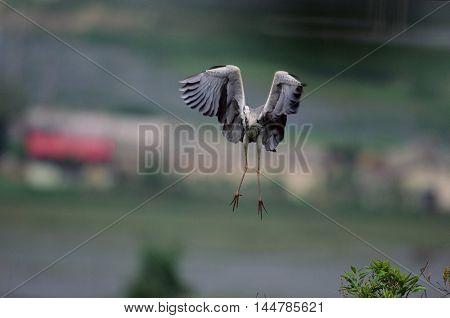 Herons flying in the sky