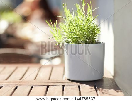 gardening, botany, decoration and flora concept - close up of green plant in flower pot on street cafe table