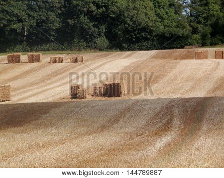 Square straw bales in stubbly field in Southern Denmark