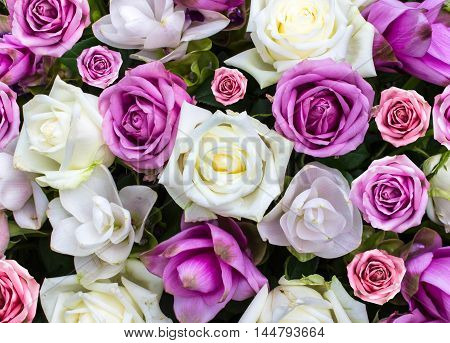 rose flower nature background love valentines day.