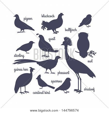 Vector bird silhouettes isolated on white. Owl and pheasant, bullfinch and crane. Vector illustration